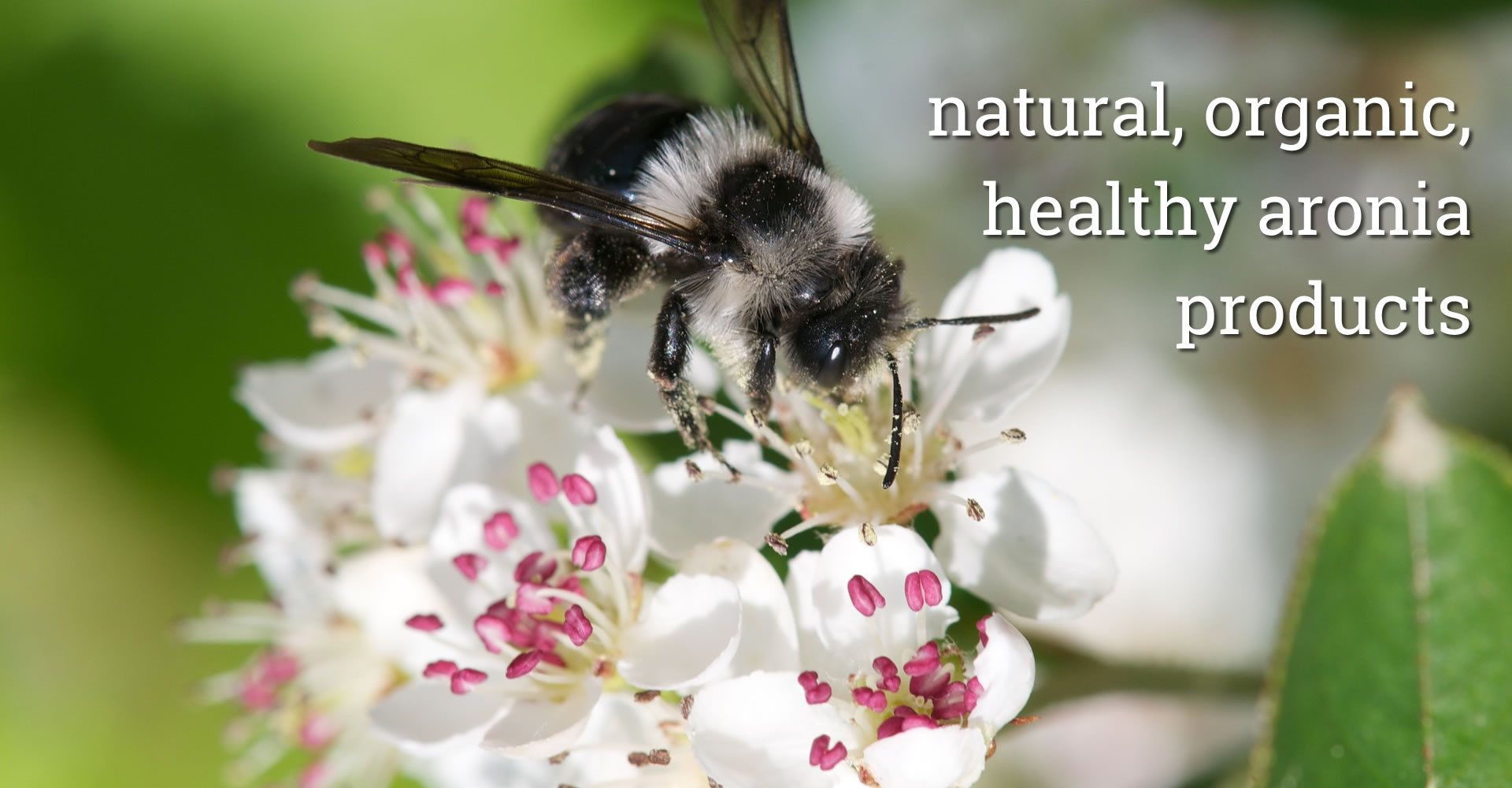 Healthy aronia products